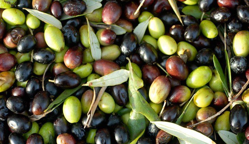Olio extra vergine di oliva Todi